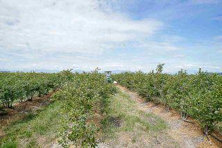 Photo 8: 16397 40 Avenue in Surrey: Serpentine Land for sale (Cloverdale)  : MLS®# R2586709