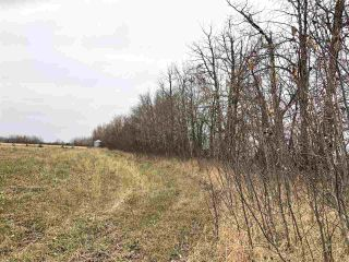 Photo 9: TWP RD 583 Range Rd 271: Rural Westlock County Rural Land/Vacant Lot for sale : MLS®# E4218433