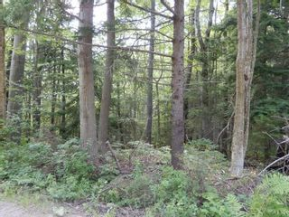 Photo 5: Pictou Landing Road in Pictou Landing: 108-Rural Pictou County Vacant Land for sale (Northern Region)  : MLS®# 202118664