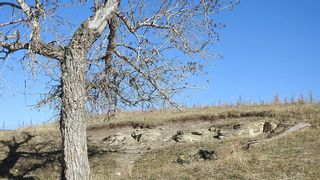 Photo 7: SW 36-20-3W5: Rural Foothills County Residential Land for sale : MLS®# A1101413
