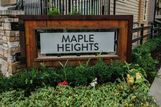 """Photo 29: 141 11305 240 Street in Maple Ridge: Cottonwood MR Townhouse for sale in """"Maple Heights"""" : MLS®# R2500243"""