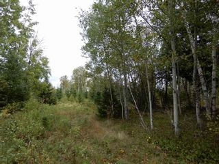 Photo 8: Tanner Hill Road in Limerock: 108-Rural Pictou County Vacant Land for sale (Northern Region)  : MLS®# 202121301