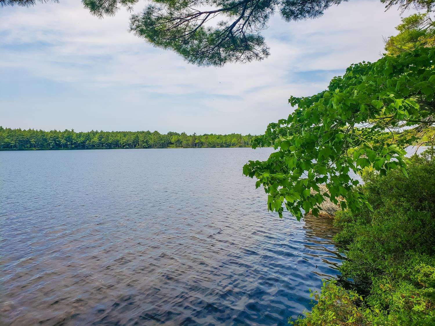 Main Photo: Lot 101 Dorey Mills Road in Clearland: 405-Lunenburg County Vacant Land for sale (South Shore)  : MLS®# 202119645