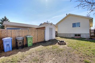 Photo 48: 66 Erin Green Way SE in Calgary: Erin Woods Detached for sale : MLS®# A1094602