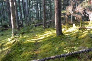 """Photo 6: 161 HELEN LAKE Road: Hazelton Land for sale in """"KISPIOX VALLEY"""" (Smithers And Area (Zone 54))  : MLS®# R2355392"""