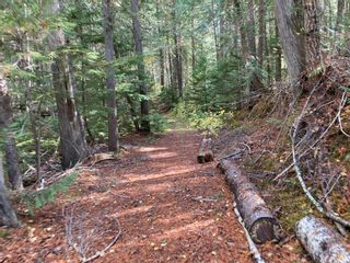Photo 17: DL3592 & DL4084 1020 Forest Service Road in Seymour Arm: syemour arm Land Only for sale (shuswap)  : MLS®# 10241424