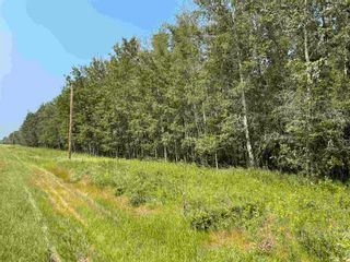 Photo 5: RGE RD 223 Twp Rd 594: Rural Thorhild County Rural Land/Vacant Lot for sale : MLS®# E4256609
