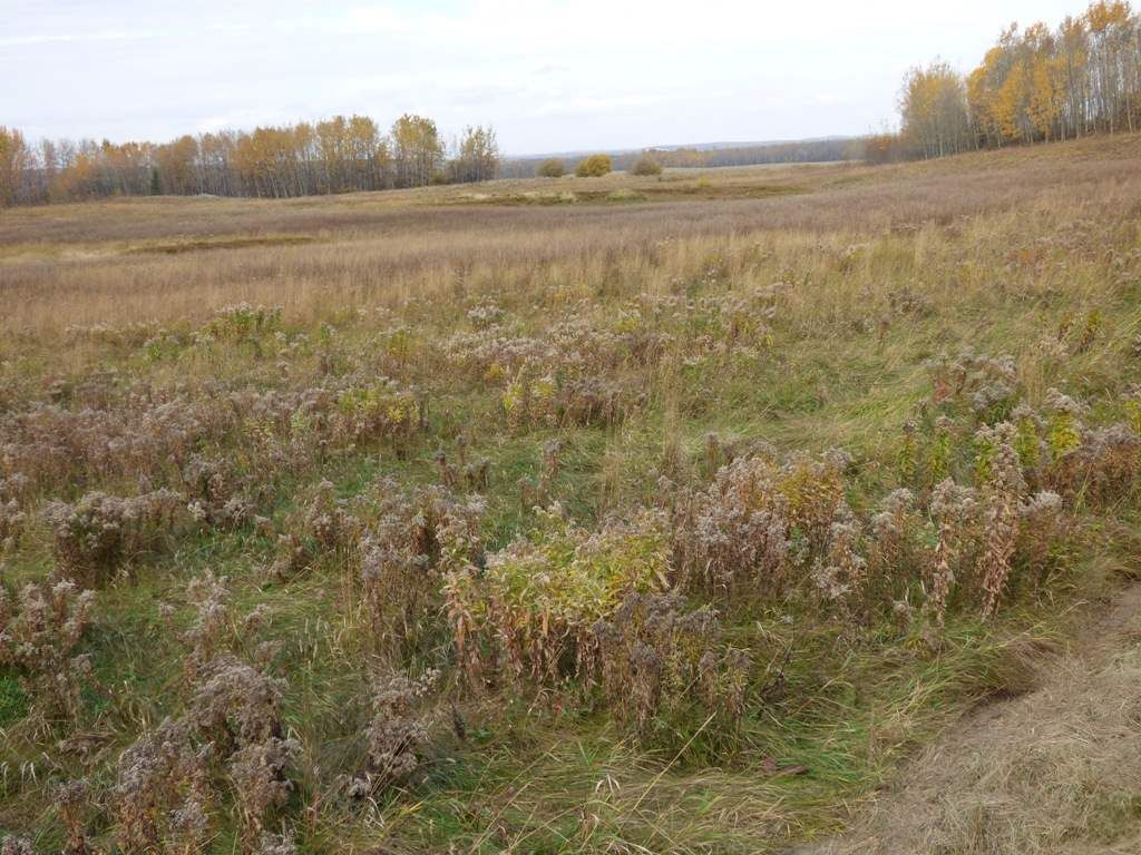 Photo 30: Photos: N1/2 SE19-57-1-W5: Rural Barrhead County Rural Land/Vacant Lot for sale : MLS®# E4217154