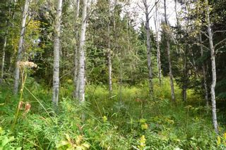 "Photo 27: LOT 1 HISLOP Road in Smithers: Smithers - Rural Land for sale in ""Hislop Road Area"" (Smithers And Area (Zone 54))  : MLS®# R2491414"