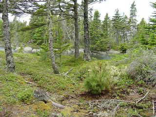 Photo 9: 0 Moshers Island Road in LaHave River: 405-Lunenburg County Vacant Land for sale (South Shore)  : MLS®# 202111805