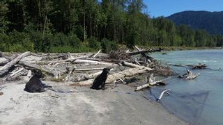 Photo 11: DL 992 MAGEE Road in Squamish: Upper Squamish Land for sale : MLS®# R2528687