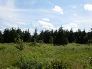Photo 21: 299 New Lairg Road in New Lairg: 108-Rural Pictou County Vacant Land for sale (Northern Region)  : MLS®# 202117815