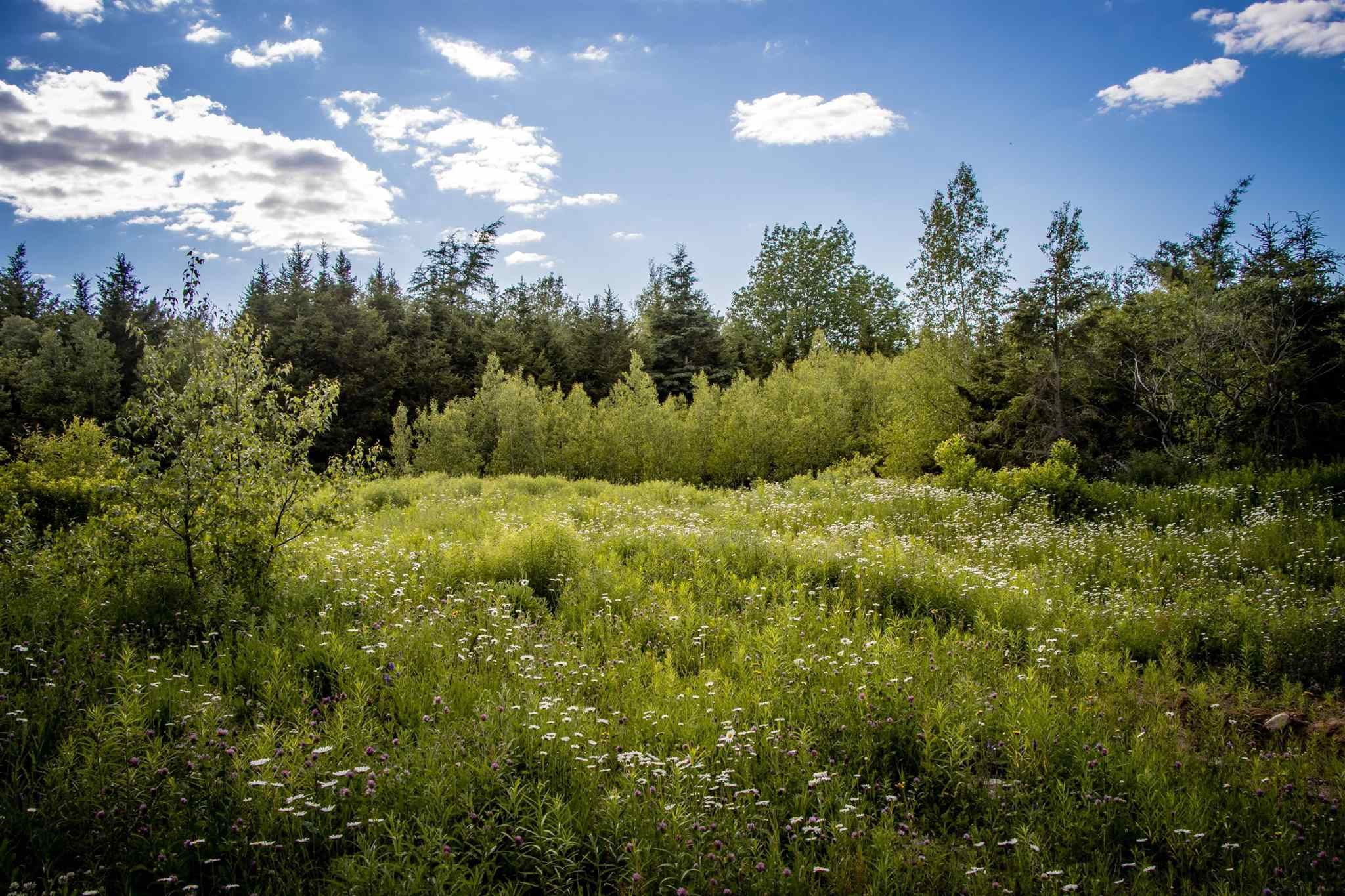 Main Photo: Lot A6 Aylesford Road in Lake Paul: 404-Kings County Vacant Land for sale (Annapolis Valley)  : MLS®# 202115394