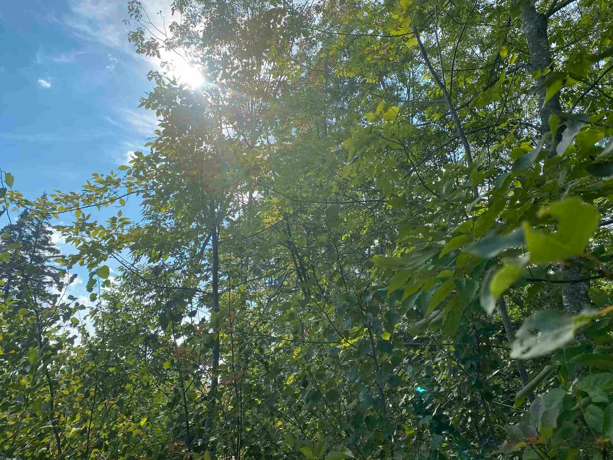 Main Photo: Lot Manse Road in Kenzieville: 108-Rural Pictou County Vacant Land for sale (Northern Region)  : MLS®# 202122852