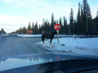 Photo 45: .. None: Bragg Creek Residential Land for sale : MLS®# A1131758