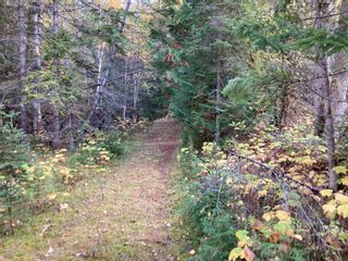 Photo 15: DL3592 & DL4084 1020 Forest Service Road in Seymour Arm: syemour arm Land Only for sale (shuswap)  : MLS®# 10241424
