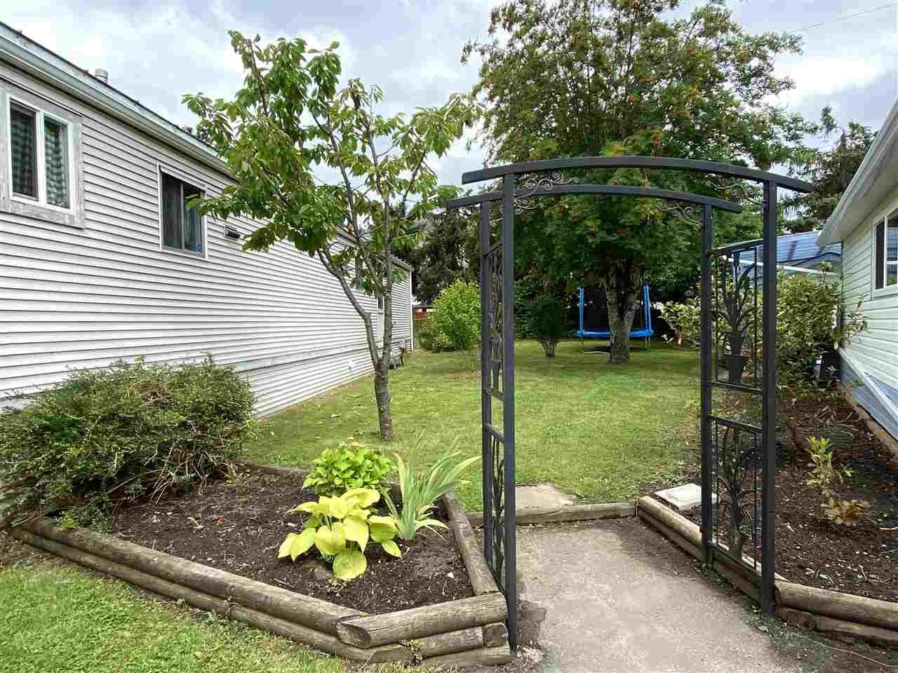 Fenced yard with cherry & plum tree