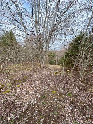 Photo 3: Sherbrooke Road in Greenvale: 108-Rural Pictou County Vacant Land for sale (Northern Region)  : MLS®# 202112435