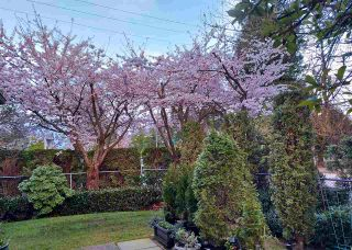 """Photo 33: 124 16233 82ND Avenue in Surrey: Fleetwood Tynehead Townhouse for sale in """"THE ORCHARDS"""" : MLS®# R2583227"""