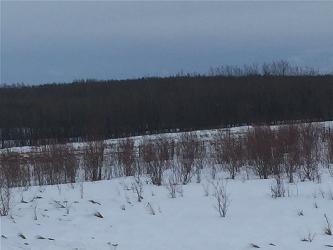 """Photo 4: Photos: LOT 6 VALLEY VISTA Road in Fort St. John: Fort St. John - Rural W 100th Land for sale in """"BEATON PARK ROAD"""" (Fort St. John (Zone 60))  : MLS®# R2541968"""