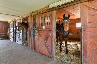 Photo 11: 348536 15 Sideroad in Mono: Rural Mono House (2-Storey) for sale : MLS®# X4459520