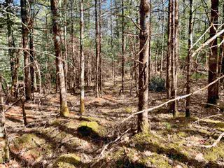 Photo 18: Lot VH-1 Highway 10 in Meisners Section: 405-Lunenburg County Vacant Land for sale (South Shore)  : MLS®# 202111350