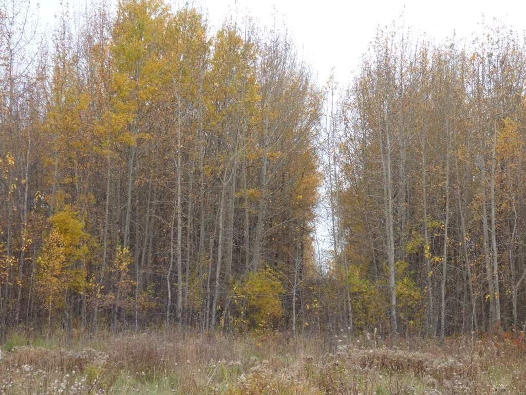 Photo 22: Photos: N1/2 SE19-57-1-W5: Rural Barrhead County Rural Land/Vacant Lot for sale : MLS®# E4217154