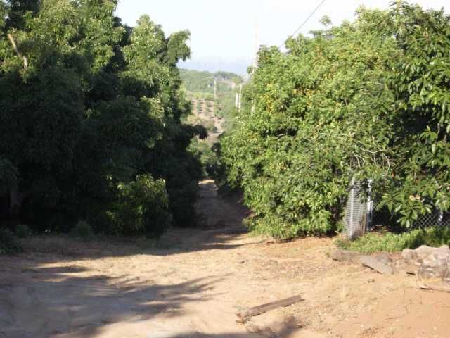 Photo 2: Photos: BONSALL Residential for sale : 3 bedrooms : 3910 Paso Del Lagos