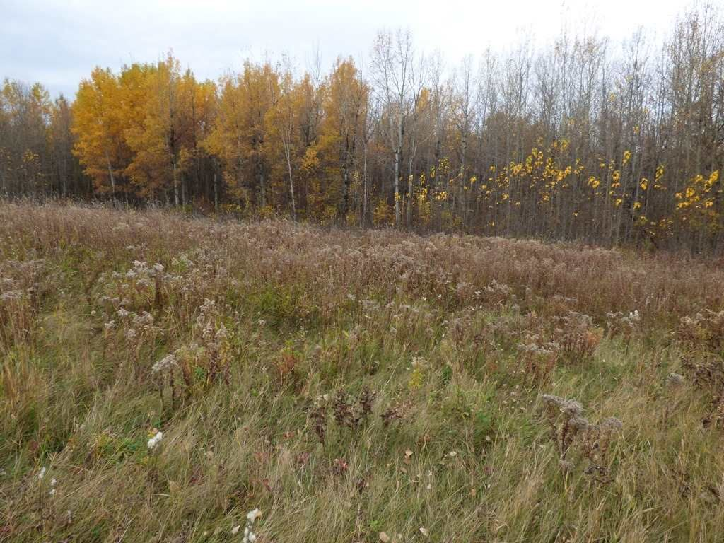 Photo 23: Photos: N1/2 SE19-57-1-W5: Rural Barrhead County Rural Land/Vacant Lot for sale : MLS®# E4217154
