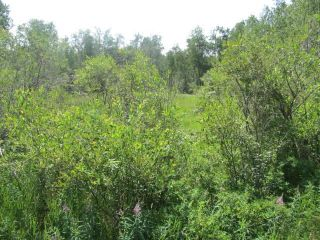 Photo 6: 398 52152 RR 210: Rural Strathcona County Rural Land/Vacant Lot for sale : MLS®# E4254227