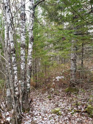 Photo 5: Lots Melrose Country Harbour Road in Country Harbour: 303-Guysborough County Vacant Land for sale (Highland Region)  : MLS®# 202102147