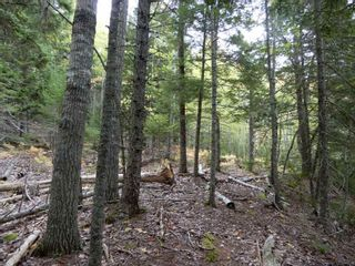 Photo 14: Tanner Hill Road in Limerock: 108-Rural Pictou County Vacant Land for sale (Northern Region)  : MLS®# 202121301