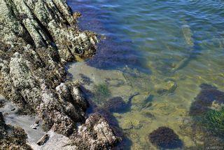 Photo 33: 16925 Tsonoqua Dr in Port Renfrew: Sk Port Renfrew House for sale (Sooke)  : MLS®# 837813