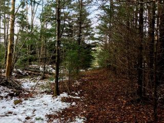 Photo 10: LOT 100ABC WEST PETPESWICK Road in West Petpeswick: 35-Halifax County East Vacant Land for sale (Halifax-Dartmouth)  : MLS®# 5158270