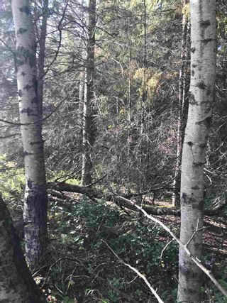 Photo 15: Pinebrook Block 1 Lot 2: Rural Thorhild County Rural Land/Vacant Lot for sale : MLS®# E4171871