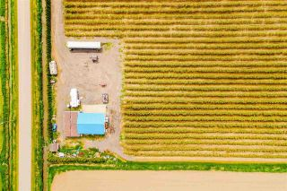 Photo 15: 4081 DIXON Road: Agri-Business for sale in Abbotsford: MLS®# C8038207
