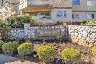 """Photo 3: 310 20120 56 Avenue in Langley: Langley City Condo for sale in """"Blackberry Lane"""" : MLS®# R2564037"""