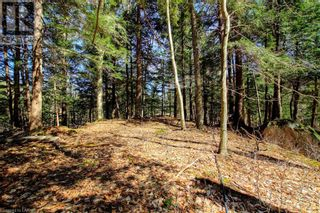 Photo 33: LOT#70 PINE Crescent in Huntsville: Vacant Land for sale : MLS®# 40109977