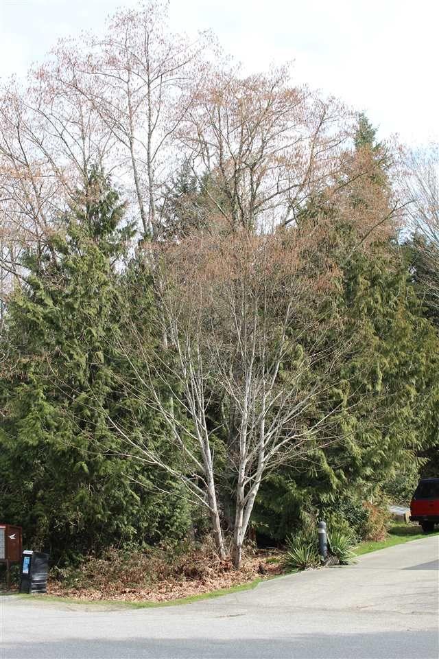 Photo 5: Photos: 6142 S GALE Avenue in Sechelt: Sechelt District Land for sale (Sunshine Coast)  : MLS®# R2264834