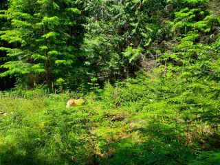 "Photo 14: Lot 49 FLINT Road: Keats Island Land for sale in ""10 Acres"" (Sunshine Coast)  : MLS®# R2460996"