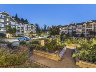 "Photo 31: 411 16380 64 Avenue in Surrey: Cloverdale BC Condo for sale in ""BOSE FARM"" (Cloverdale)  : MLS®# R2606531"