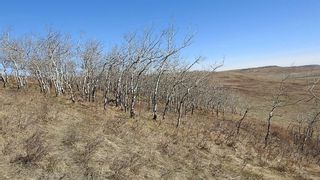 Photo 11: SW 36-20-3W5: Rural Foothills County Residential Land for sale : MLS®# A1101413