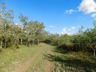 Photo 10: Rge Rd 231 North of Twp Rd 564: Rural Sturgeon County Rural Land/Vacant Lot for sale : MLS®# E4262842