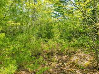 Photo 14: Lot 101 Dorey Mills Road in Clearland: 405-Lunenburg County Vacant Land for sale (South Shore)  : MLS®# 202119645