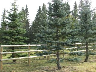 Photo 13: 39-33048 Range Road 51: Rural Mountain View County Land for sale : MLS®# A1085992