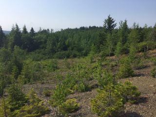 Photo 3: LOT 100ABC WEST PETPESWICK Road in West Petpeswick: 35-Halifax County East Vacant Land for sale (Halifax-Dartmouth)  : MLS®# 5158270