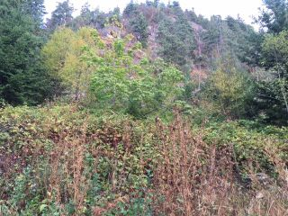 Photo 5: Lot 1 MARINE Drive in Granthams Landing: Gibsons & Area Land for sale (Sunshine Coast)  : MLS®# R2535798