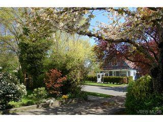 Photo 9: 1650 Davie Street in VICTORIA: Vi Jubilee Residential for sale (Victoria)  : MLS®# 322366