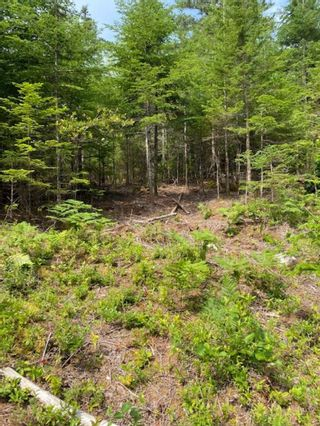 Photo 6: HL-XAC 245 Old Halifax Road in Glen Haven: 40-Timberlea, Prospect, St. Margaret`S Bay Vacant Land for sale (Halifax-Dartmouth)  : MLS®# 202118186