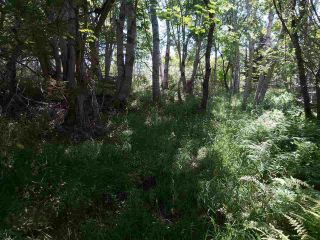 Photo 11: Lots Shore Road in Churchover: 407-Shelburne County Vacant Land for sale (South Shore)  : MLS®# 202011924